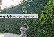 Sövényvágás